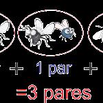 tres moscas son tres pares