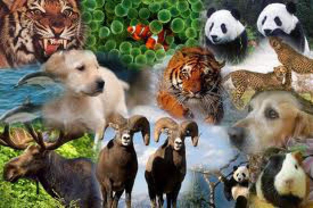 Cuantos animales hay en el mundo cocupo for Cuantos tipos de arboles hay en el mundo