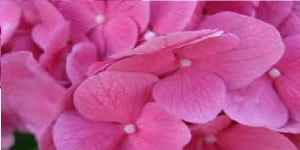 Color rosa 2