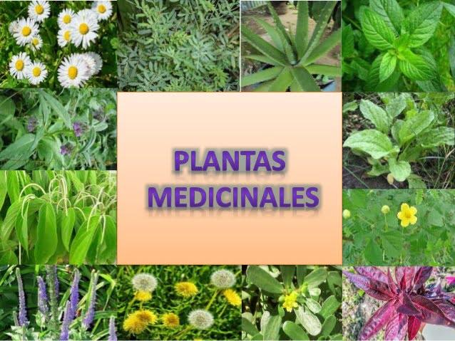 Que son las plantas medicinales cocupo - Cuales son las plantas con flores ...