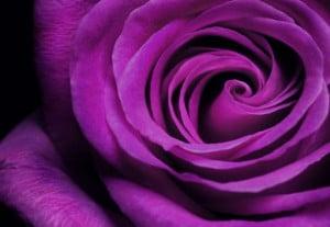 Color violeta