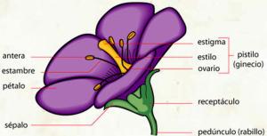flor-copiar