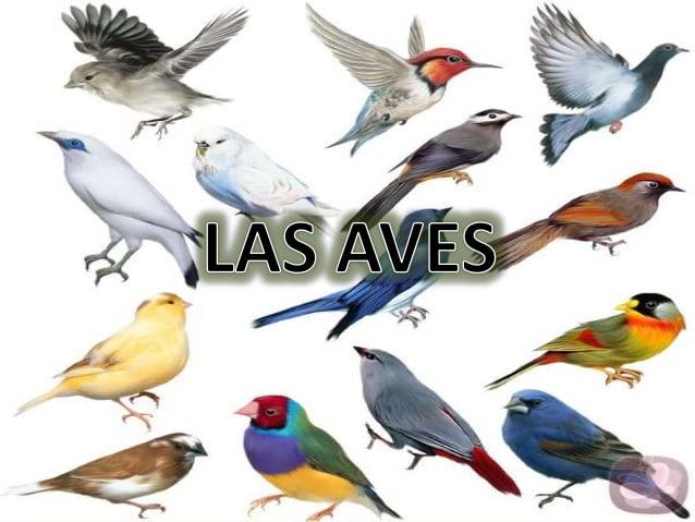 como orinana las aves