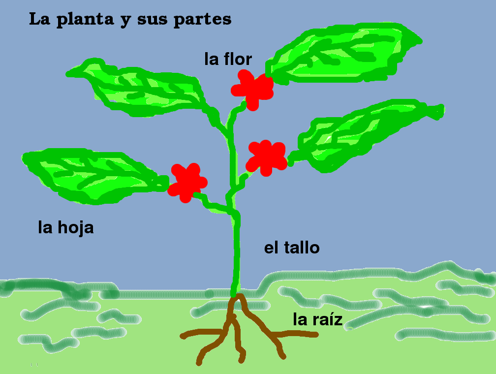 Cuales son las partes de una planta cocupo - Cuales son las plantas con flores ...