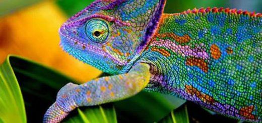 coloridos3
