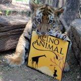 reino animal4