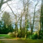Jardin Botanico valdivia