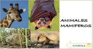 como se clasifican los animales mamiferos