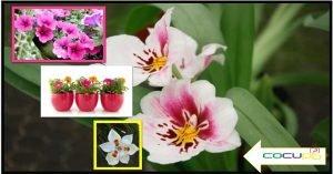Cuales son las caracteristicas de los cultivos ornamentales