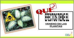 Que efectos tiene el veneno de las plantas